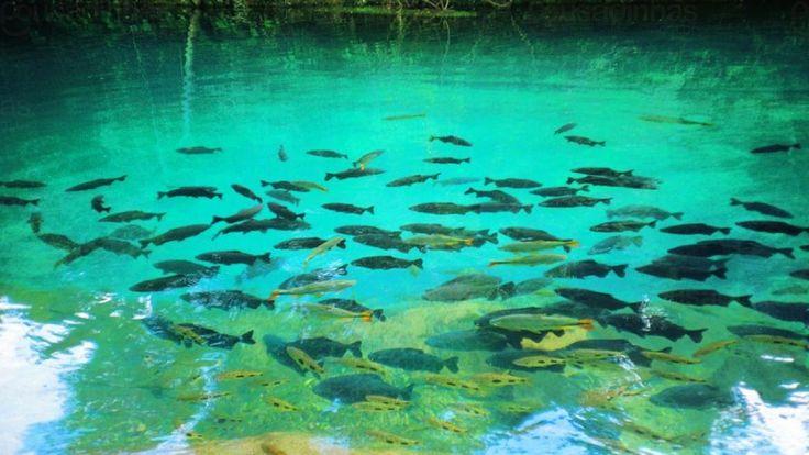O que fazer em Caldas Novas? Temos neste post a reposta! Quem viaja a Caldas Novas não quer saber de outra coisa a não ser conhecer as famosas fontes hidrotermais e seus belos pontos turísticos.