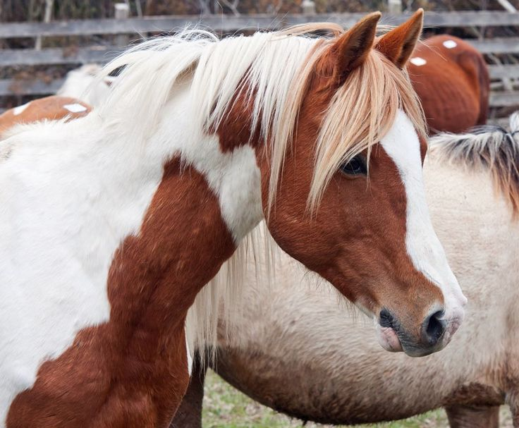 (92) Horseandponyforsale.com - Horse Classifieds - Photos