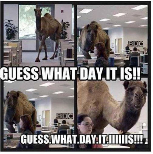 129 best hump day images on Pinterest
