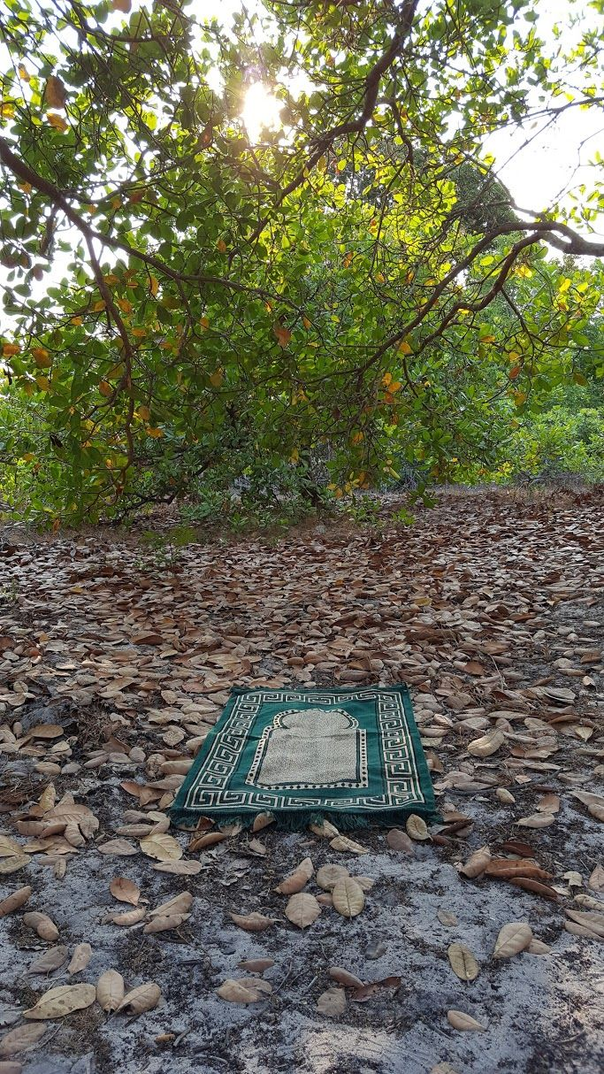 Looks like a perfect place to worship our Creator!   Where's your favorite place to make salah?