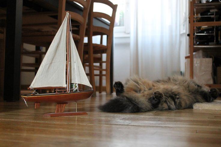 Ho sfogliato un catalogo perché quest'estate voglio andare in barca ma poi ho capito che non esistono i giubbottini salvagente della mia misura e quindi niente, sono morto.