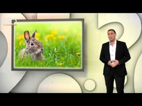 ▶ Pourquoi mange-t-on des oeufs, des cloches et des lapins en chocolat à Pâques ? - YouTube