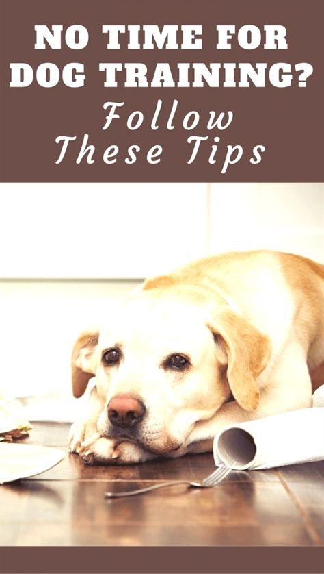 Dog Training Equipment K9 Dog Training To Protect Dog Training
