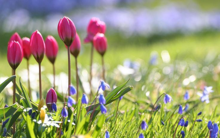 Spring flowers wallpapers HD | Wallpapers, Backgrounds, Images ...