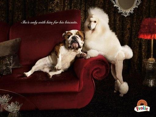 Реклама еды для собак: Она с ним только из-за его печенюшек :)