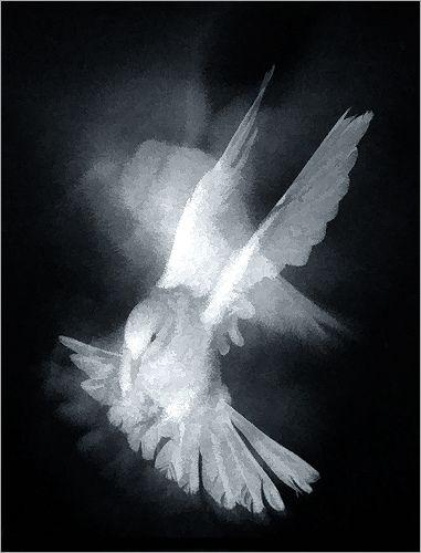 flying dove: buzz treatment: Flying-Dove-03-buzz