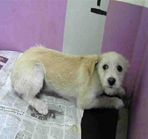 Jacairn dog for Adoption in Missouri City, TX  ADN-817244 on
