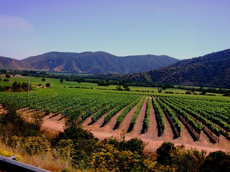 vineyards at Santiago, Chile