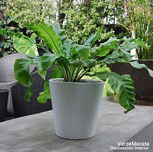 VerdeMaceta Plantas listas para decoración