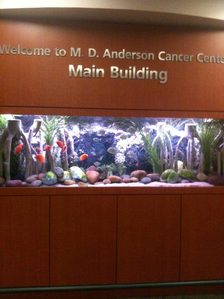 10 best md anderson spaces and places images on pinterest for Places to fish in houston