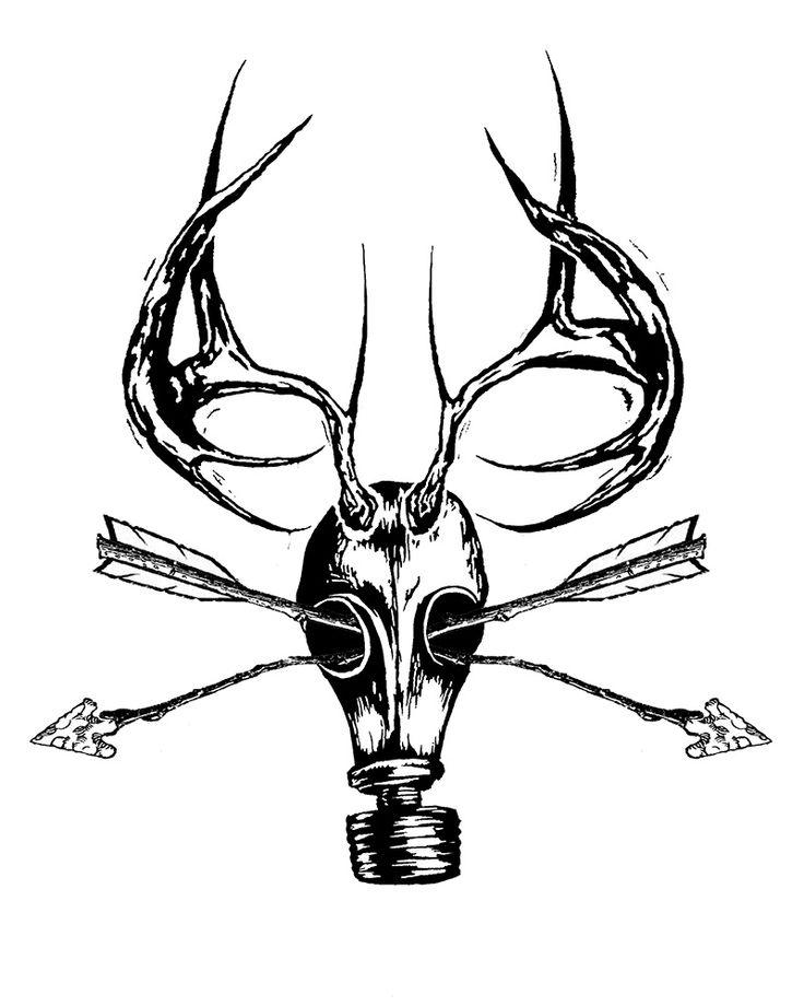 White Tail Deer Sckull Drawn: 42 Best Images About Deer Pics On Pinterest