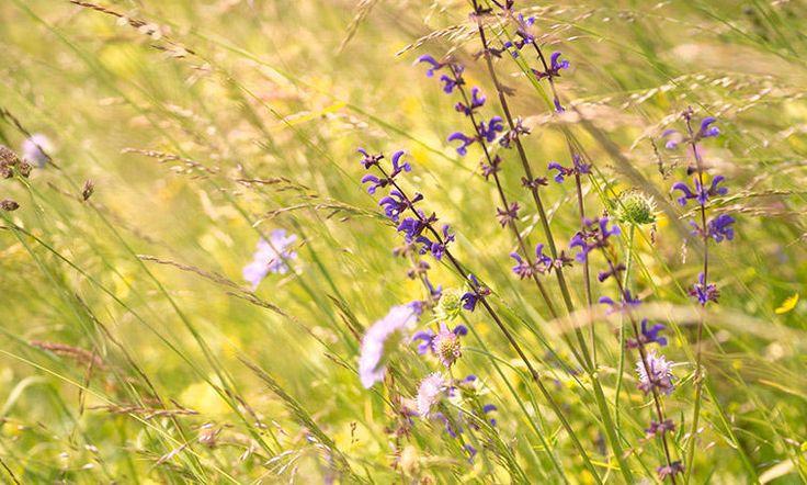 Créez votre prairie fleurie Tout est possible : une grande prairie à la place d'une grande pelouse, traversée de larges allées tondues pour y marcher et lui donner un air de jardin, un îlot d'herbe non tondue joliment dessiné avec la tondeuse, une lisière en bordure de votre haie au fond du jardin... Choisissez ce qui conviendra le mieux à votre jardin et la technique la mieux adaptée à votre herbe.   Arrêt de la tonte Si votre pelouse possède déjà une bonne diversité de fleurs (pâquerette…