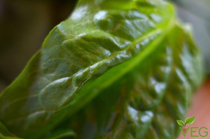 Le fonti vegetali di ferro