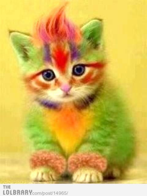 Rainbow Cat | Rainbow Kitty | The Lolbrary - New Funny Random Pictures Added Daily