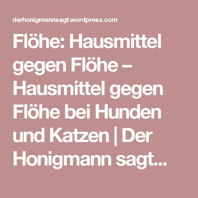 Flöhe: Hausmittel gegen Flöhe – Hausmittel gegen Flöhe bei Hunden und Katzen | Der Honigmann sagt...