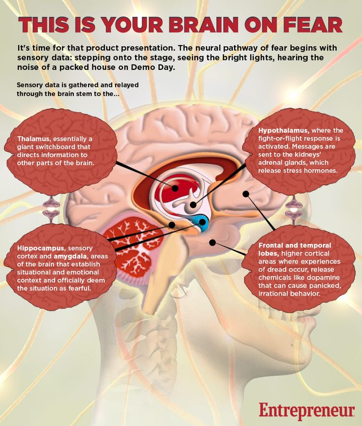 #Health+#Infographics+-+This+Is+Your+Brain+On+Fear++#Infografia