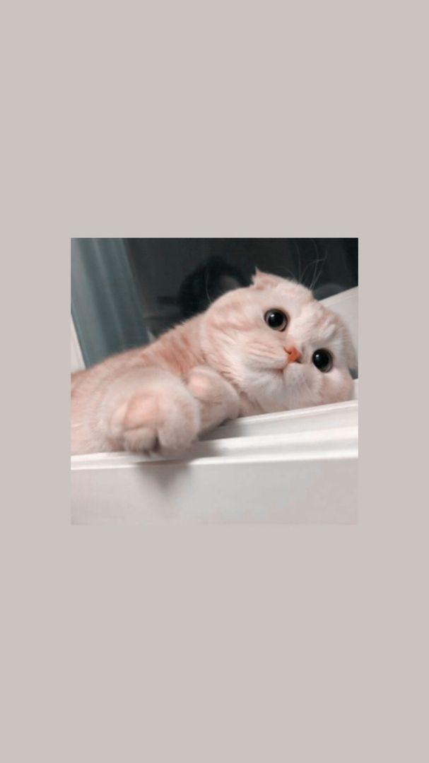 Wallpaper Cute Cat Wallpaper Foto Kucing Aesthetic Novocom Top