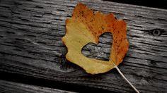 autumn cover photos for facebook - Google keresés