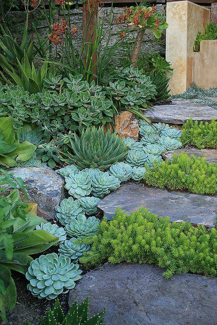 Sukkulenter i hagen (Huset på landet)