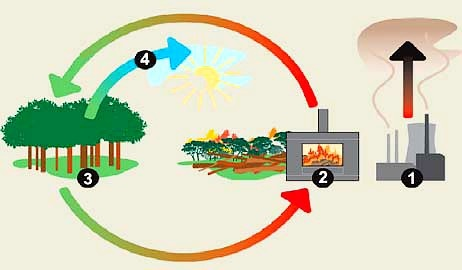 Burning Biomass for Energy - Carbon Neutral - What a Stupid Idea