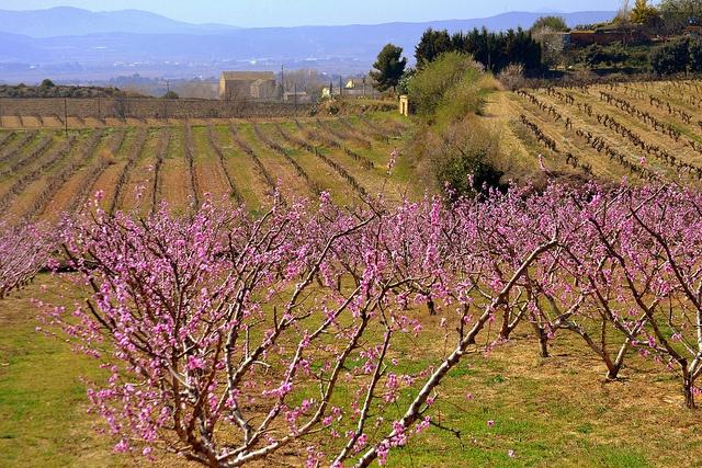 Spring in Penedes