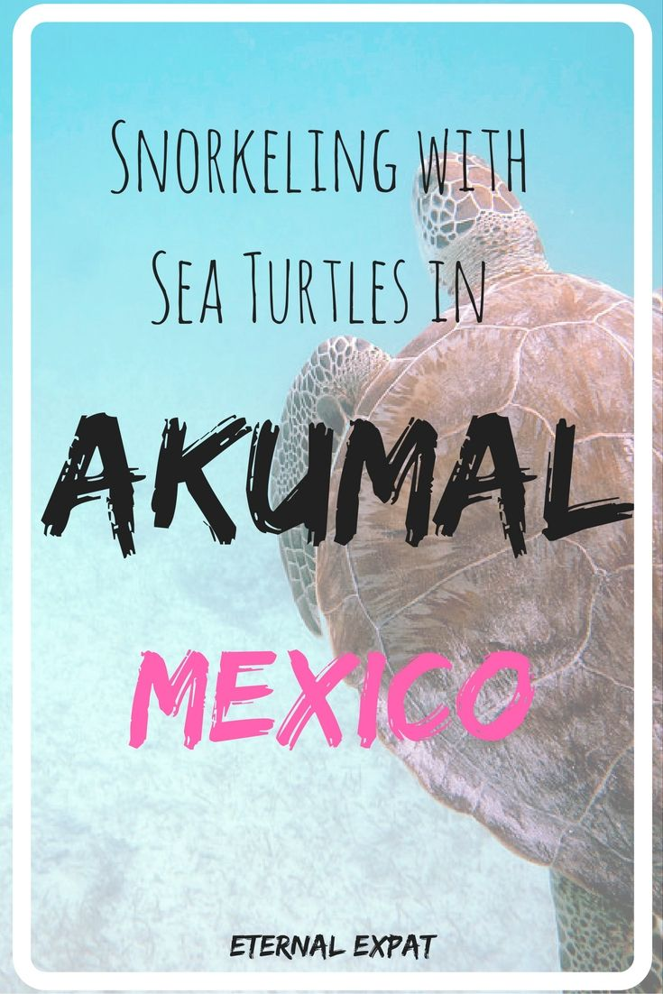 Snorkeling with Sea turtles in Akumal, Mexico - everything you need to know to come face-to-face with these gentle giants! | Eternal Expat