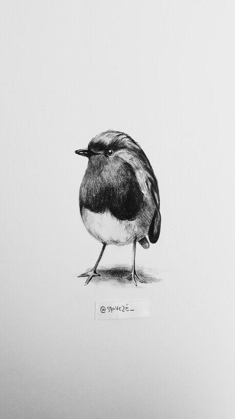 A Bird. Using 7 & 8 B pencil on sketch paper. Photo reverences #bird #graphite #drawing
