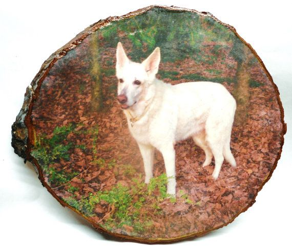 Picture on Wood Dog Pictures Photo on Wood by DoctorWoodcraft My shop on ETSY: www.etsy.com/shop/DoctorWoodcraft