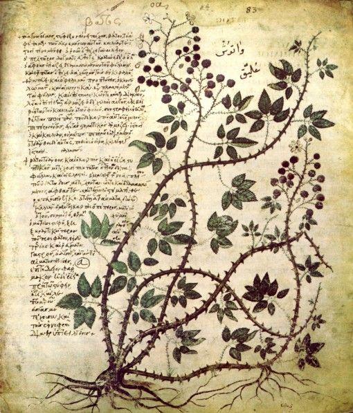 Masterful job of a text ruaround, Greek with Arabic marginalia, Codex Anitia Juliana, AD 512