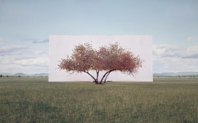 Tree Abroad #2, #이명호