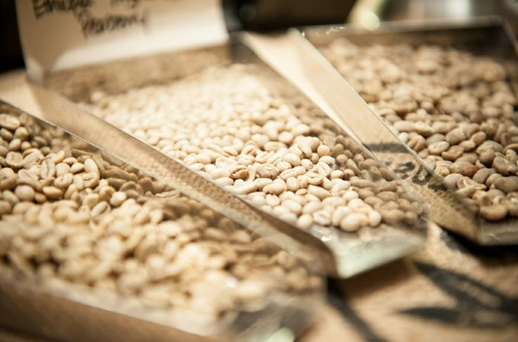Raw, unroasted coffee beans.
