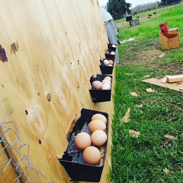 Roll out nest boxes would be great! I would add some sort of housing around these though to protect the eggs from the elements and predators that would want to eat them before I can get to them. #homefarmideas #idea #diy #chicken #egg #eggs #chickens #farm #gardening #farms #farmers #farming #farmlife #garden #gardens #gardening #gardeners #mygarden #organic #organicfood #organicgardening #organics #grow #growth #growing #homestead