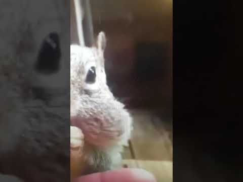 http://gogreenpestcontrol.ca/squirrels-kings-chunking/