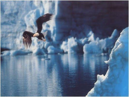 ÁGUILA:   Espíritu / Valentía   Las plumas de Águila son usadas en todo el mundo como herramientas ceremoniales, y son consideradas ...