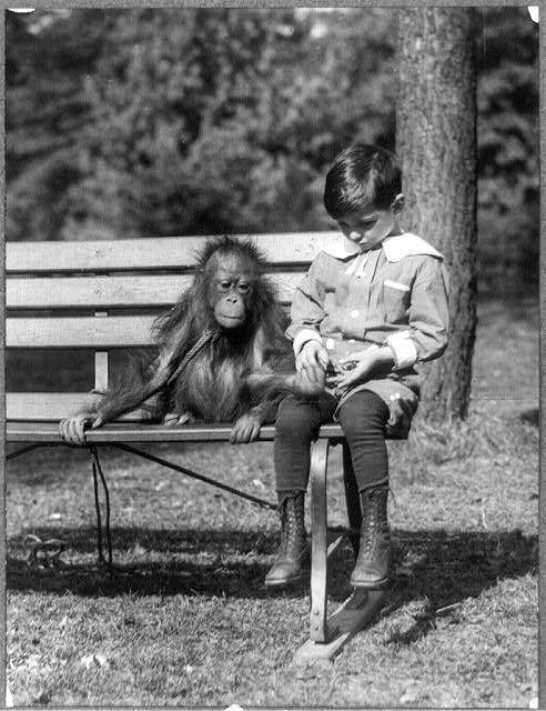 """In questa fotografia di data ignota (scattata tra il 1909 e il 1932) un ragazzo americano è  seduto con un orangutan su una panchina al National Zoo, Washington, DC. La panchina può essere il luogo di incontri ravvicinati eccezionali, quasi del """"terzo tipo"""", che stabiliscono un contatto pacifico tra esseri viventi appartenenti a specie diverse."""
