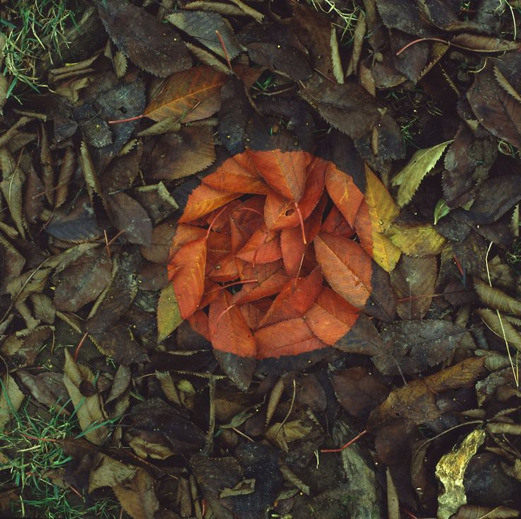 Andy Goldsworthy: leaves ...