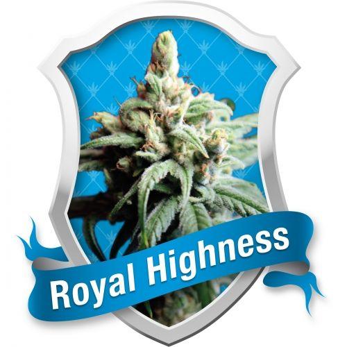Il s'agit d'une autre nouvelle variété féminisée de cannabis issue de la sélection des Royal Queen Seeds des graines de marijuana thérapeutique. Royal Highness est un croisement entre Respect et Dance Hall. Respect est, à son tour, un croisement entre Juanita la Lagrimosa, une variété qui a un grand pourcentage de CBD, et Cannalope Haze, une grande Sativa. Ce croisement, combiné avec Dance Hall, une très be…