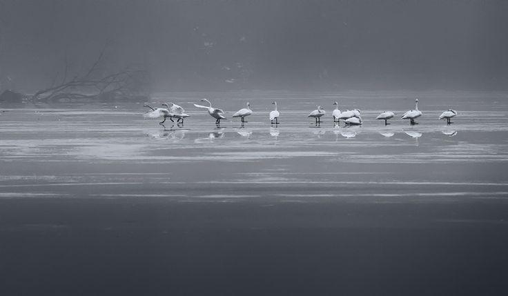 Fotograf \ s fotografie KIM SUK EUN - Peisaj de mai sus gheață