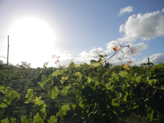 Michelle Hayward Photography - SIRROMET Winery, Mt Cotton QLD