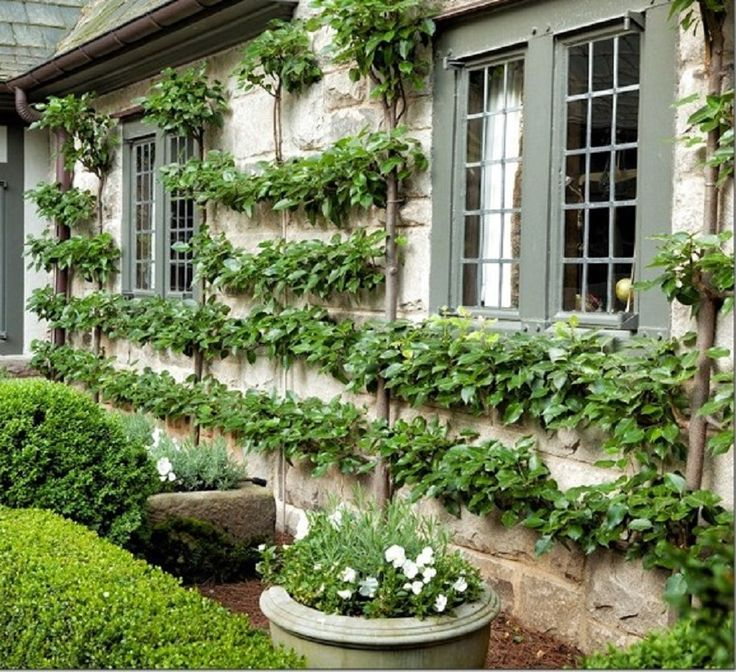 Early American Gardens: Early American Espalier & Wall Trees
