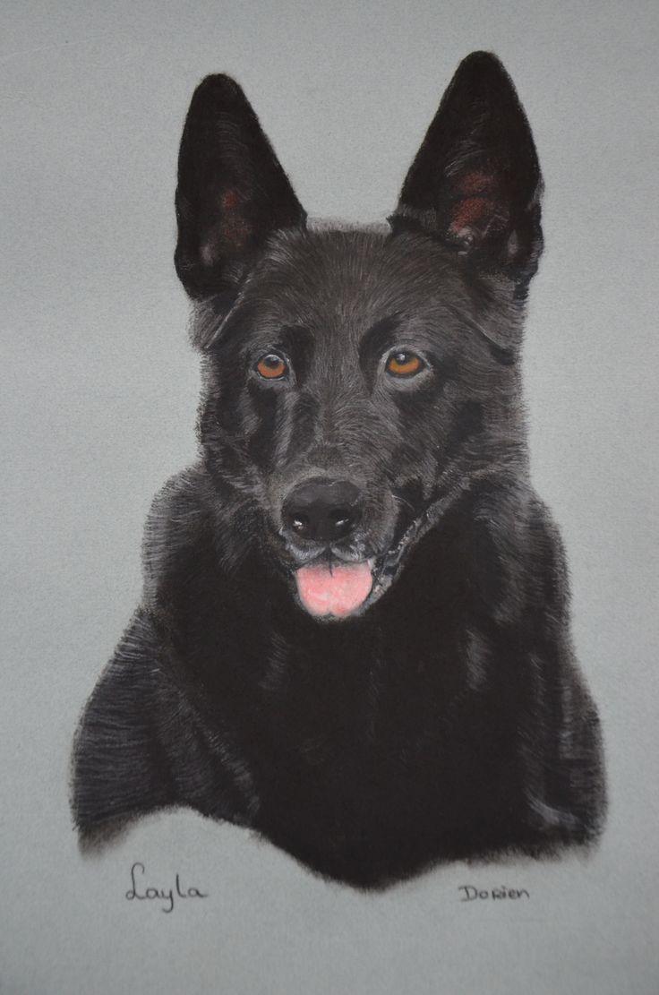 zwarte duitse herder gemaakt met pastel