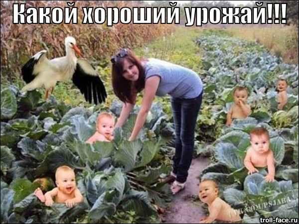 http://umor2013.ru/wp-content/uploads/urozhaj.jpg