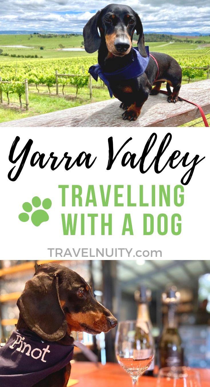 Dog Friendly Yarra Valley Visiting The Yarra Valley With A Dog With Images Yarra Valley Dog Friends Dog Friendly Accommodation