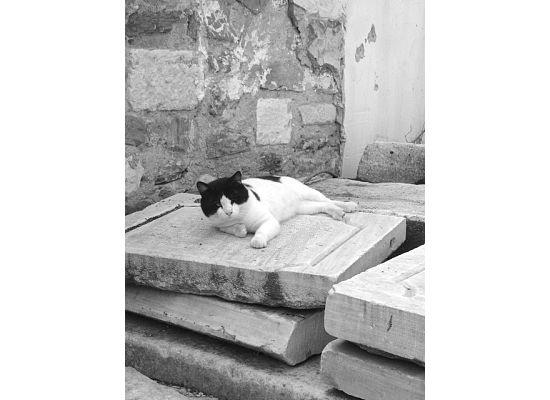 Cat in Thessaloniki!