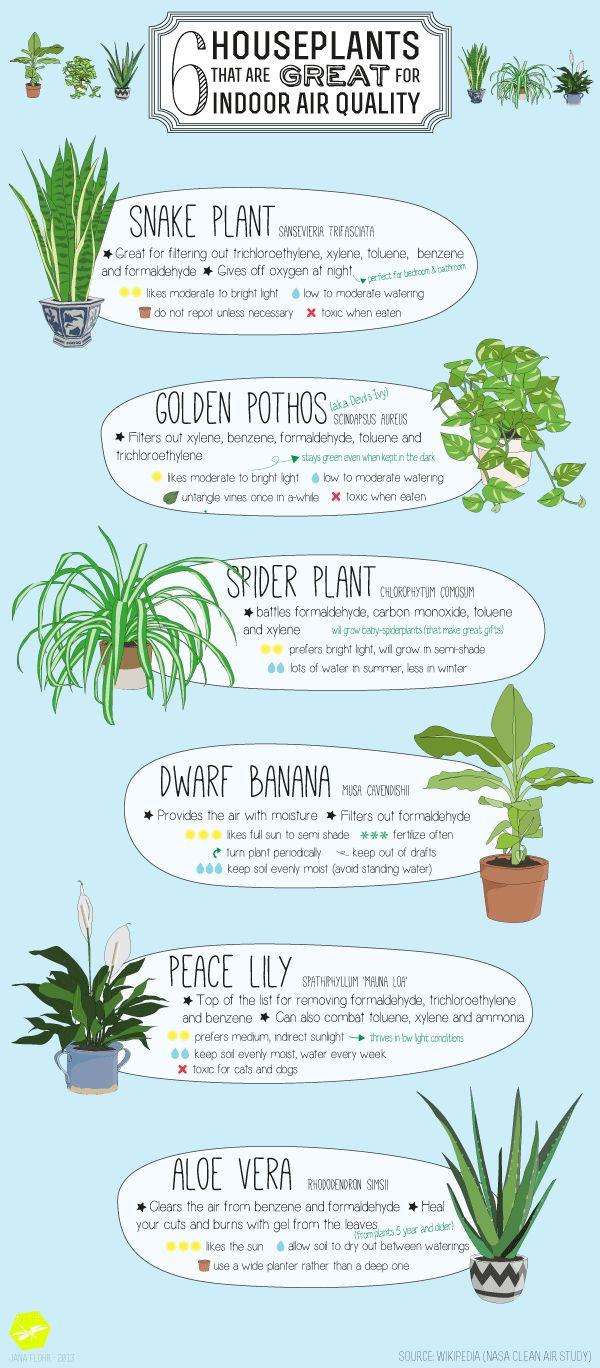6 houseplants that are great for indoor air quality | infographic by Jana Flohr | via HouseofThoL.blogspot