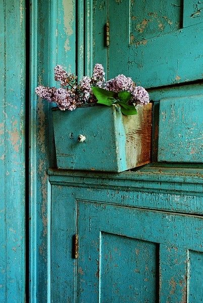 Purple lilacs in a turquoise drawer