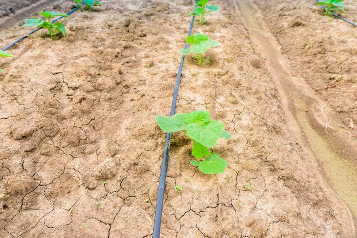 10 Best Subsurface Drip Irrigation Images On Pinterest
