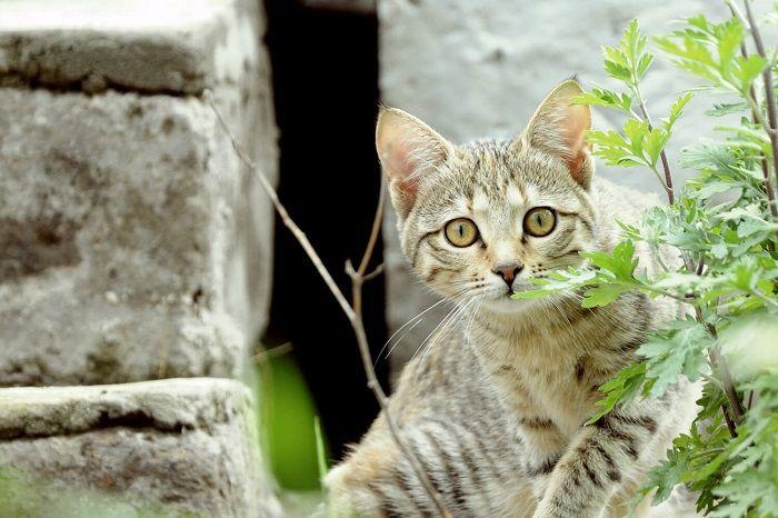 I parassiti intestinali del gatto più frequenti