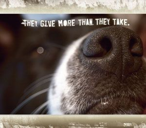 Dogs - They give more than they take.