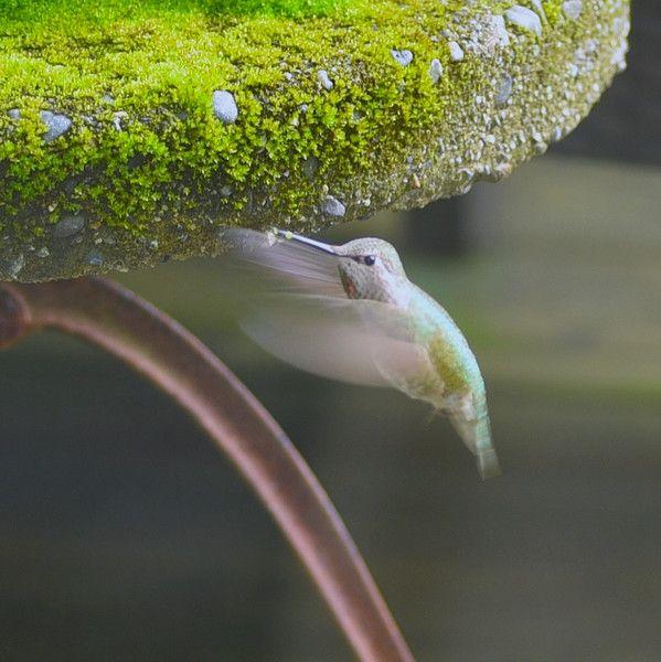 Green Gem Asparagus: 51 Best Images About Moss ɬ Ferns On Pinterest